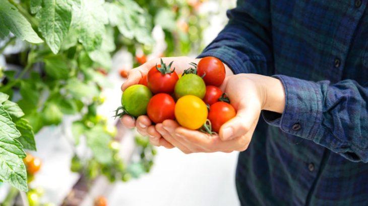 【無観客試合になりました】Neighbor's Farm ×Criacao Shinjuku 『東京でも、とれたての野菜を!』。5/4 (火・祝)前期第5節の試合会場で、とれたて野菜の販売が決定!